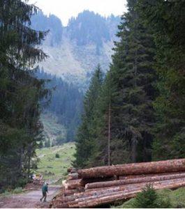 Rencontre débat . Quelle gestion pour la forêt haut-savoyarde ? @ salle d'animation à Entremont